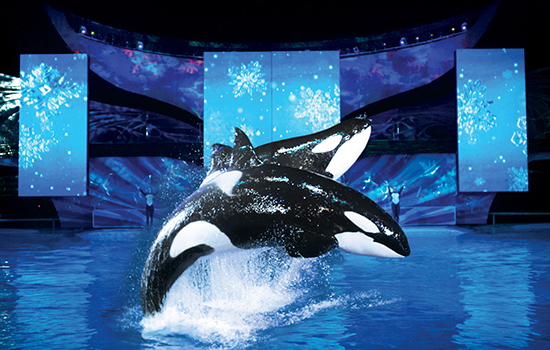 Shamu® Christmas Miracles -- SeaWorld invites guests to experience the grace and beauty of our Shamu family at our nighttime holiday show, Shamu Christmas Miracles.