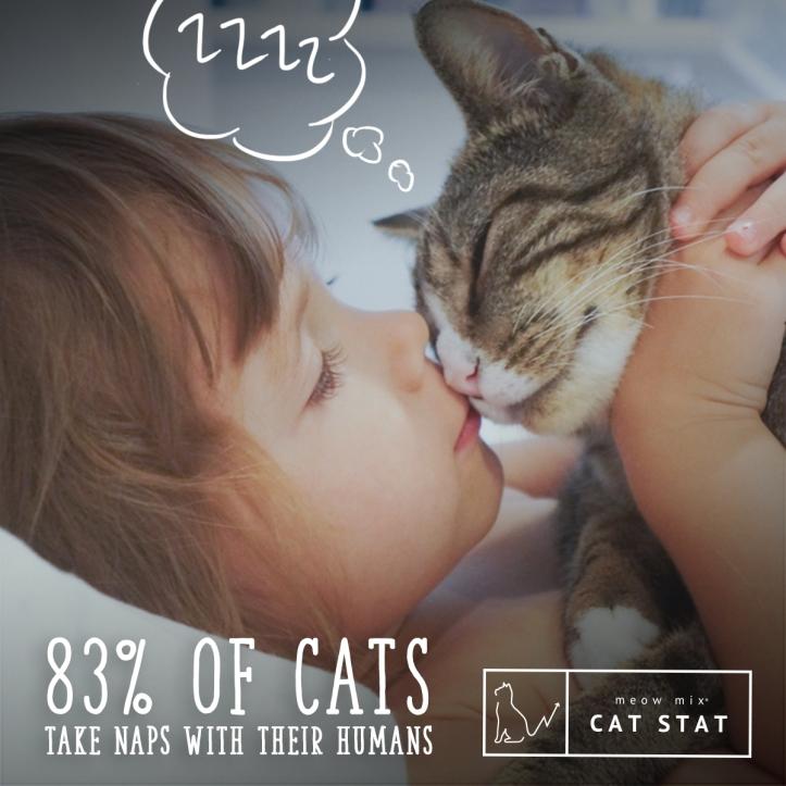CatStats_1.jpg